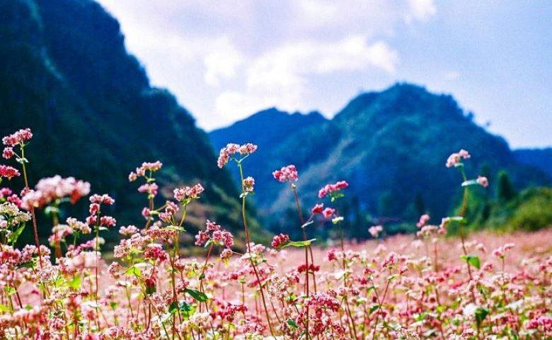 Kinh nghiệm di chuyển tại Hà Giang